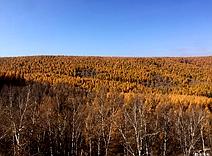 秋天的塞罕坝