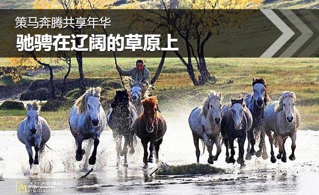 策马奔腾共享年华 驰骋在辽阔的草原上