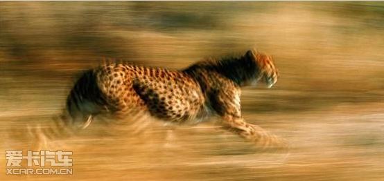 qq头像动物霸气猎豹