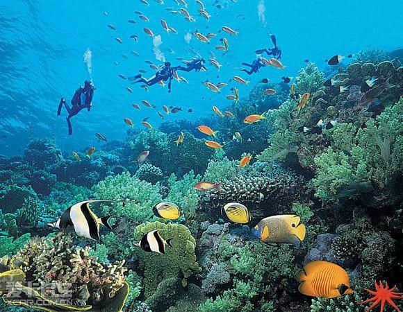 壁纸 海底 海底世界 海洋馆 水族馆 桌面 580_450