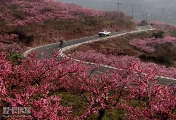 野桃花也有春天