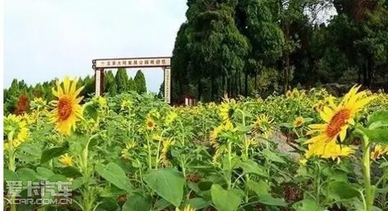 2,永州一中   赏花地址:    1,新田龙家大院      2,永州植物园