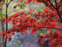愛在深秋叶红时