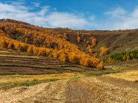 行走在乌兰布统金色的世界里【二】