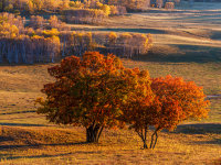 行走在乌兰布统金色的世界里
