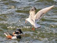深圳湾——与候鸟的邂逅