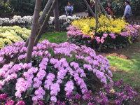 春暖花开了