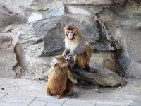独步游首都——北京动物园