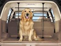 因妨碍驾驶安全 狗坐副驾罚200元扣2分