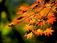 去找寻那壮丽的河山之行摄辽宁红叶