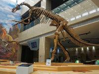 白垩纪国家地质公园---恐龙化石博物馆