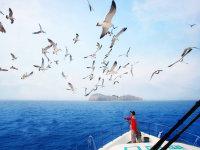 行摄海驴岛