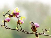 春天到,最美的春鸟图送给大家