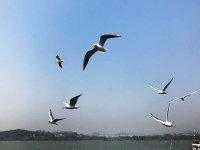 【旅行玩家】无锡太湖仙岛之游