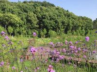 龙灵山绿道赏花