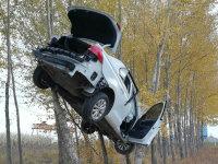 绝无特效 白色轿车飞上树 一周图片新闻