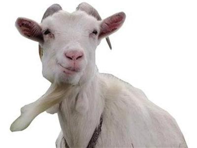 三只羊引发连环车祸 结果令人触目惊心