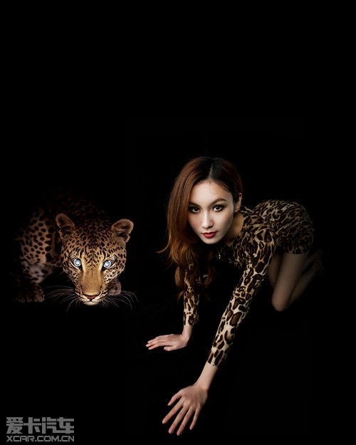 【暗夜精灵】豹纹美女