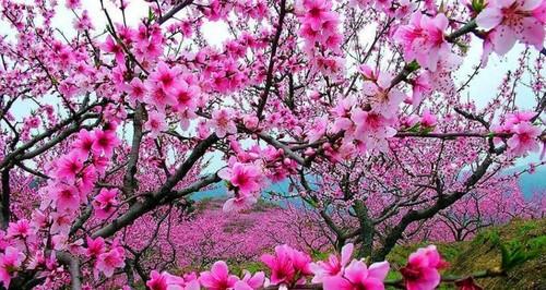 桃花园图片全图_桃花源风景区图片