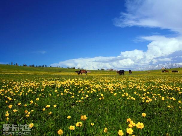愚人节下雪了 我们的新疆不是没有春天