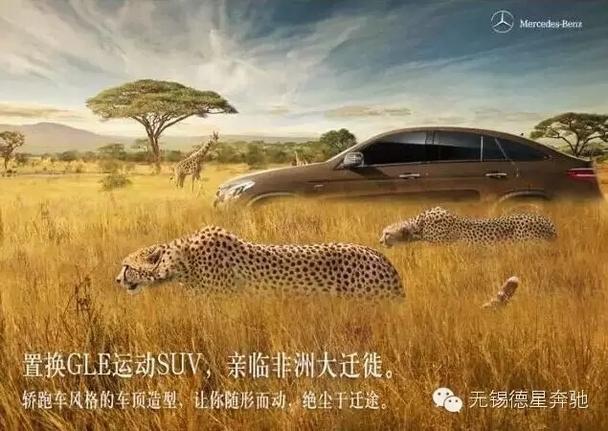 赏非洲动物大迁徙双人游——免费!免费!免费!