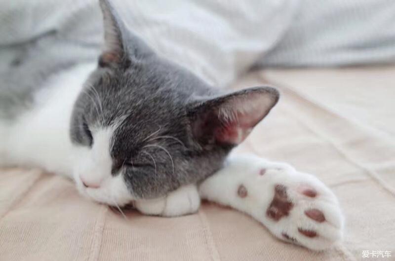 爪子太可爱了