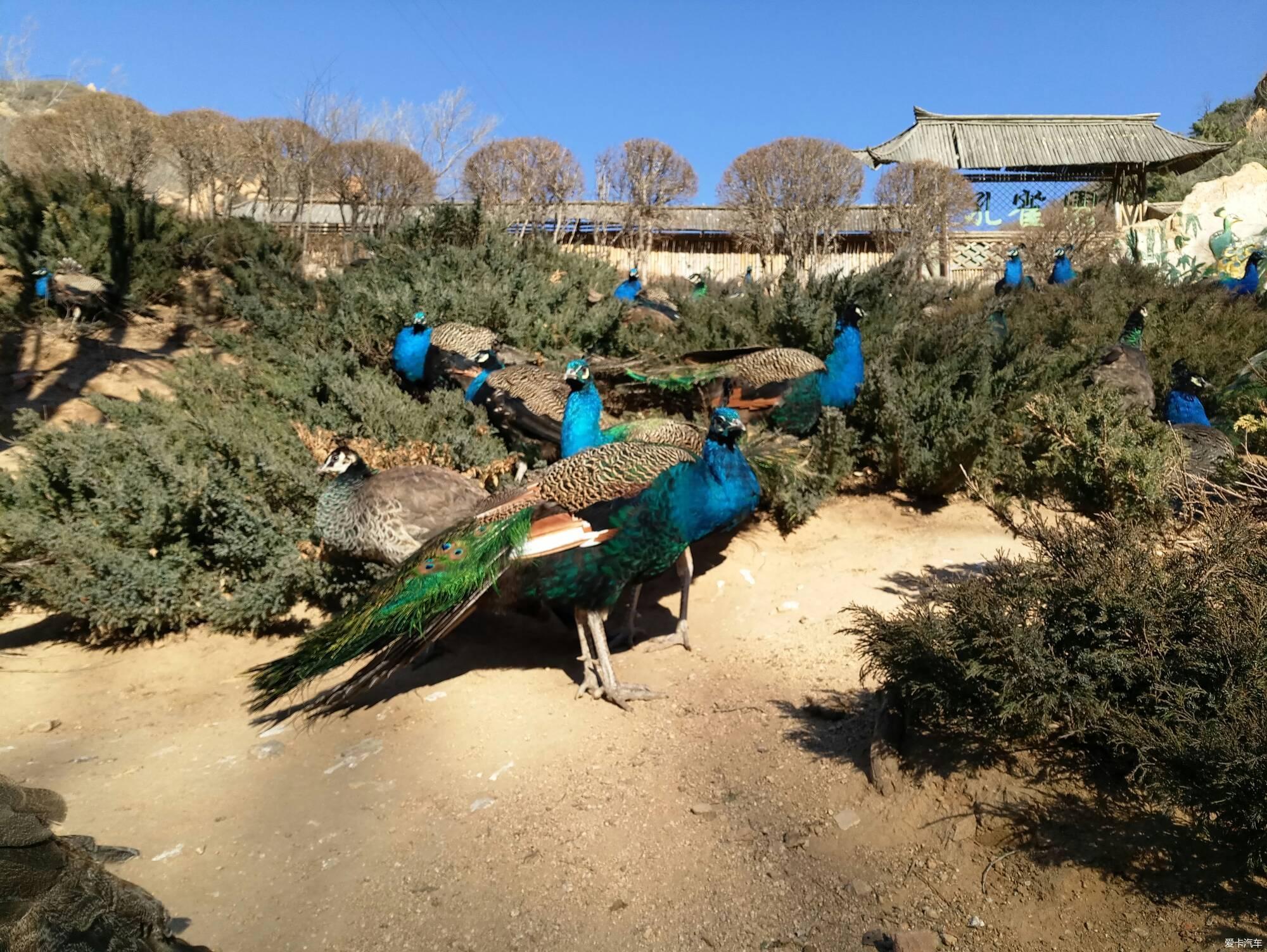 八达岭野生动物园自驾游