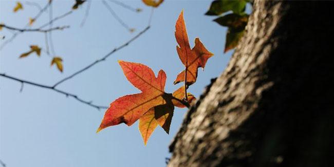 天清气爽 周末登高赏红叶