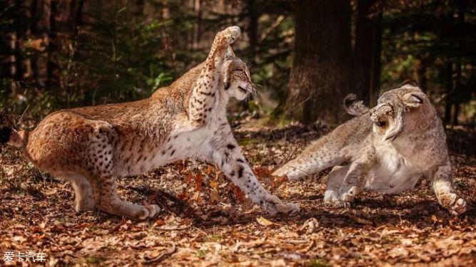 【帕杰罗改装】老兵不死,看传奇山猫如何重获新生