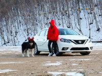 带阿拉斯加去滑雪 单身与狗的一次旅行