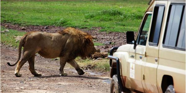 非洲六国狂野之旅