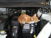 车里有蝉鸣有猫叫?没想到异响竟来自……
